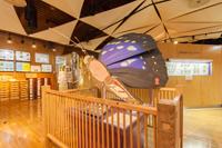 オオムラサキの大型断面模型