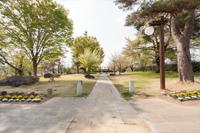 芝生公園 ( 駐車場脇 )