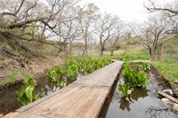 水生植物沼