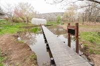 トンボ湿生植物観察沼