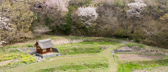 オオムラサキ自然公園