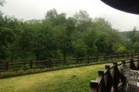 20140611テラスから見た自然公園