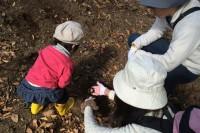 20141108カブトムシの幼虫探し(1)