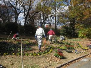 201411花壇 植え替え (3)