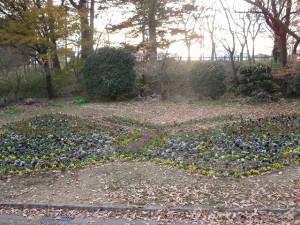 201411花壇 植え替え (4)