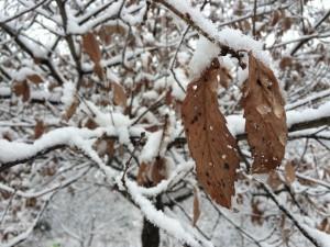 20141216雪 (1)