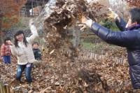 20141130落ち葉の雨だー! (2)(広報加工)