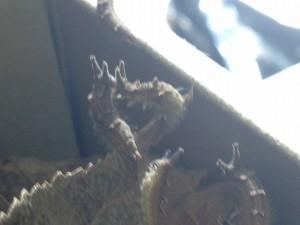 20141223 - 調査(越冬幼虫)「む?向こうがまぶしいぞ?」
