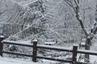 20150115雪  (3)