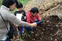 カブトムシの幼虫探し (3)
