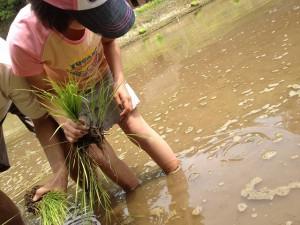 20120520お田植え - あ、カエルだ!