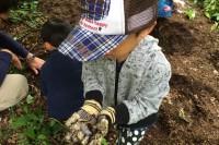 20150906 - カブトムシの幼虫探し (3)