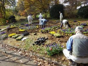 20151117 - 花壇植え替え (5)
