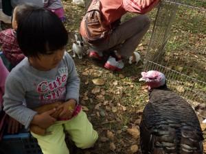 20151101 - オオムラサキの日フェスタ (56)生き物ふれあい04