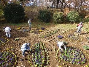 20151117 - 花壇植え替え (6)