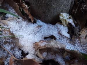 20160119雪 (21)