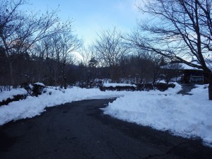 20160119雪 (11)