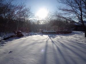 20160119雪 (4)