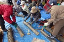 20160206 - キノコのホダ木作り(ナメコ) (6)