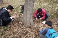 20160319 - オオムラサキの越冬幼虫調査 (5)