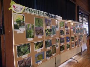 20160529 - イモムシ写真コンテスト