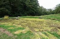 20160928 - 稲刈り