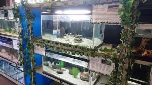 20170122hf - エントランス水族館