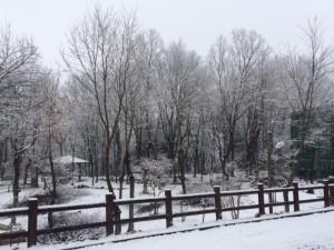 20170326 - 自然公園雪