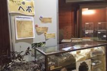 クロスズメバチ展示