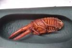 牡蠣殻リッキー2